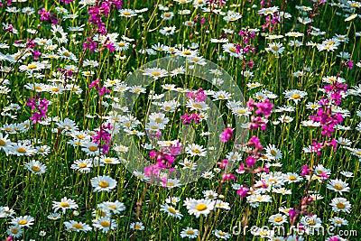 Multi fiori colorati che sbocciano su un prato fotografie for Fiori che sbocciano