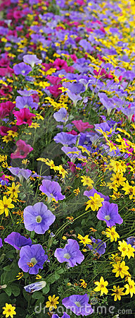 Multicolor summer flowers