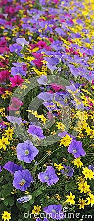 Multicolor summer flowers