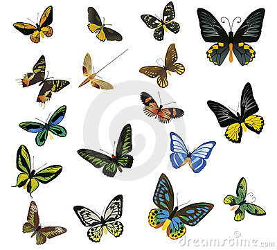 Multicolored Butterflies On A White Background Stock Photo - Image: 8732280