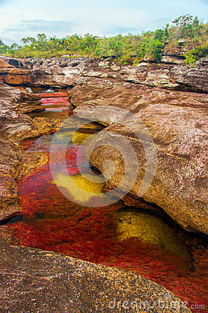 A Multicolored River in Colombia