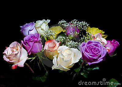 Multicolored roses on black