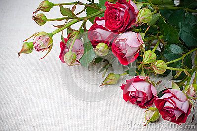 Multicolored roses on linen fabric