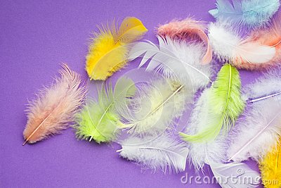 Multicolored soft parrot feathers on a purple background, space for text Stock Photo
