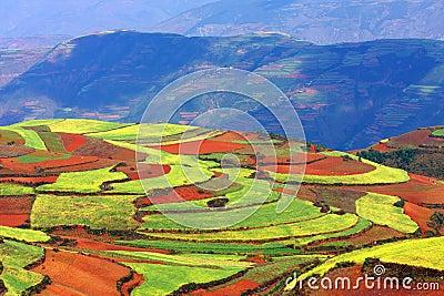 Multicolored upland