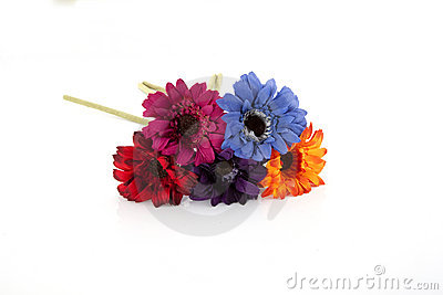 Multiple colored flowers