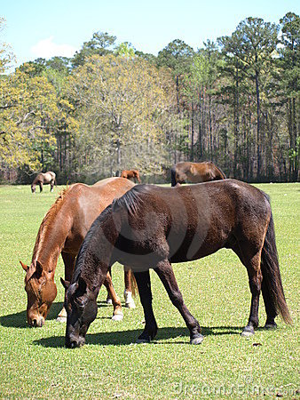 Multiple Horses