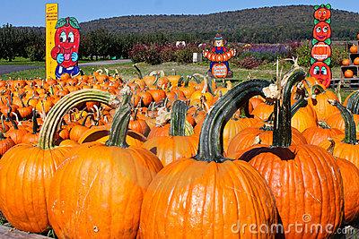 Multiple Large Pumpkins Editorial Image
