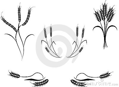 Multiple Wheat Illustrations