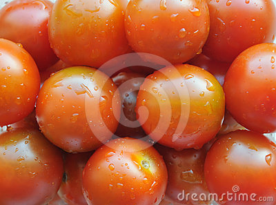Multitude of cherry tomatoes closeup