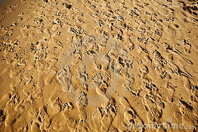 Multitude of footprints on the sand