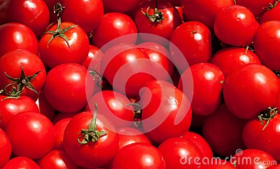 Multitude of tomatoes