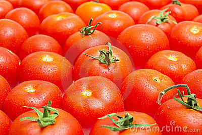 Multitude of tomatoes close-up