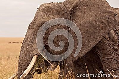 Mum Elephant in Kenya