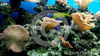 Mundo subaqu?tico colorido e bonito maravilhoso com corais e os peixes tropicais vídeos de arquivo
