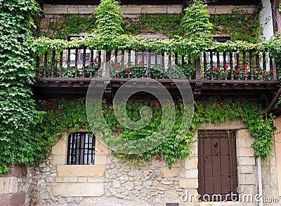 Murgröna på fasaden