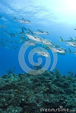 Murials Reef Fish
