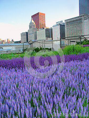 Murie Garden Millennium Park Chicago Editorial Stock Photo