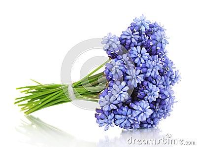 Muscari - hyacinth