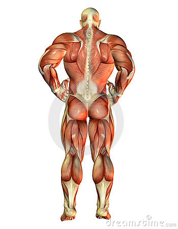 Muscle Body Builder view back