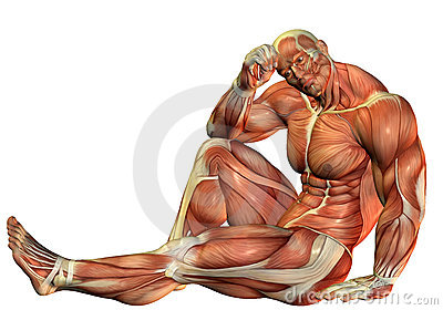 Muscle Body builders in a seated pose