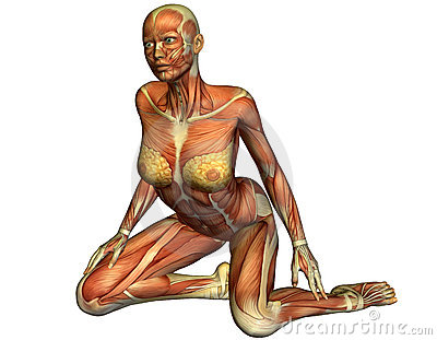 Muscle of a kneeling woman