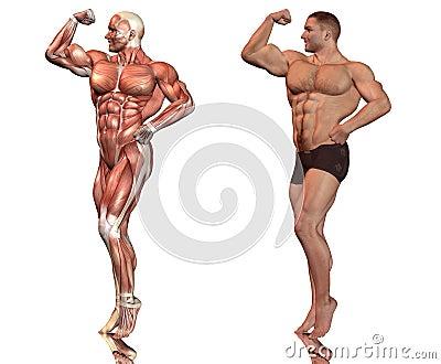 Muscle man pose