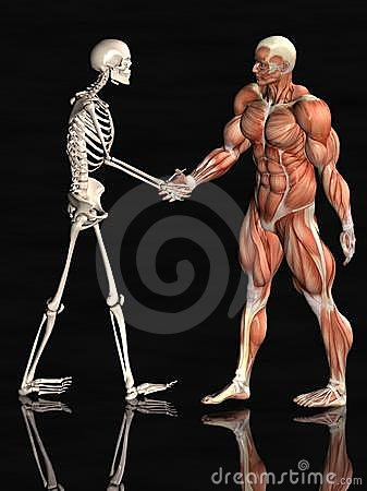 Skeletal/Muscular System - Lessons - Tes Teach