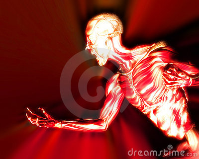 Muscles On Human Body 11