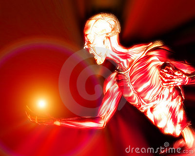 Muscles On Human Body 14