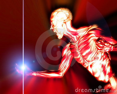 Muscles On Human Body 15