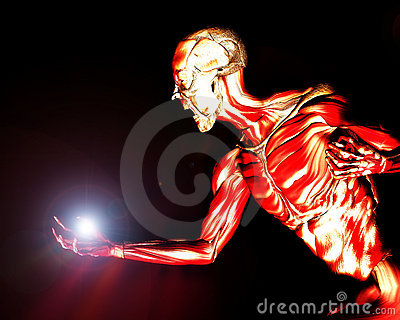 Muscles On Human Body 16