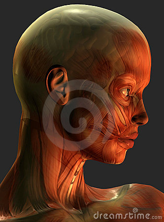 Muscles of human head