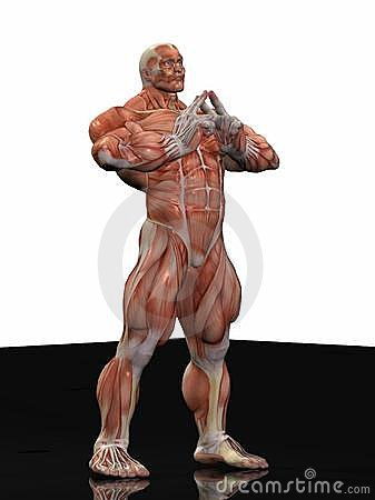 Muscular anatomical man
