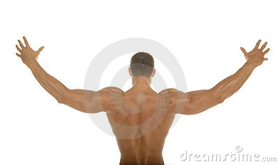 Muscular athletic body builder back