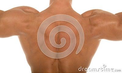 Muscular athletic body builder back
