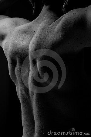 Free Muscular Back Royalty Free Stock Photo - 6733655