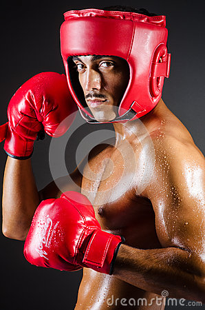 Muscular boxer in studio