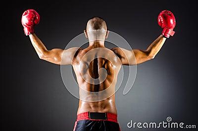 Muscular boxer in studio
