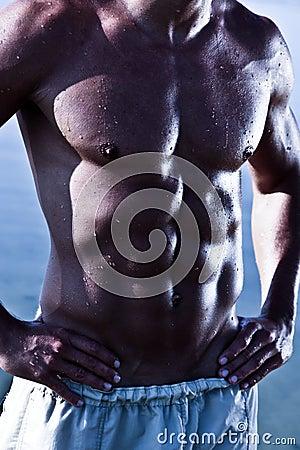 Muscule Sensual Male Torso