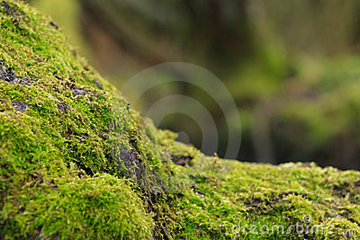 Musgo na árvore