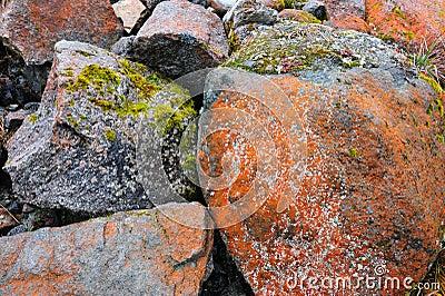 Musgos en piedras