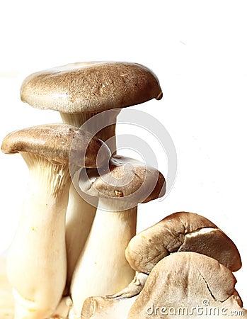 Oyster King Mushroom