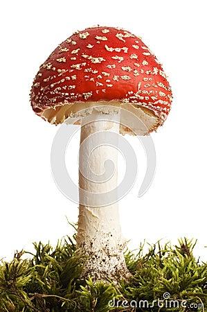 Free Mushroom Royalty Free Stock Photography - 5373727