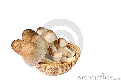 Mushroom in a basket