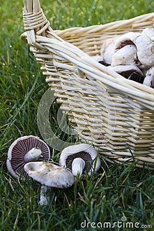 Mushroom and basket