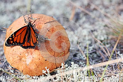 Mushroom with butterfly