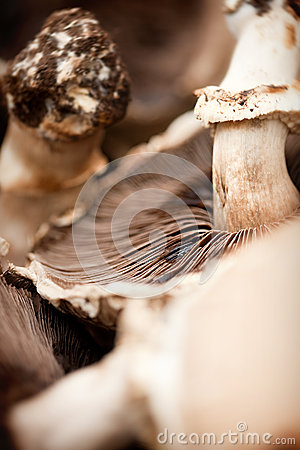 Mushroom close up
