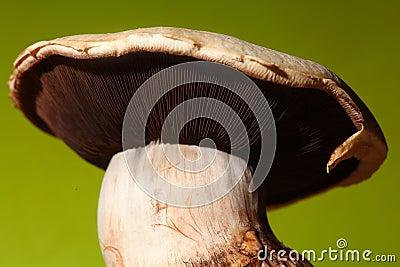 Mushroom closeup