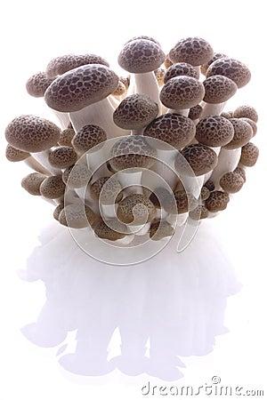 Mushroom clump